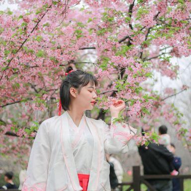 2019-03-17 顾村公园樱花 门票自费_摄影师晓东的返片